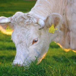 How to Find Inexpensive Grass Fed Beef